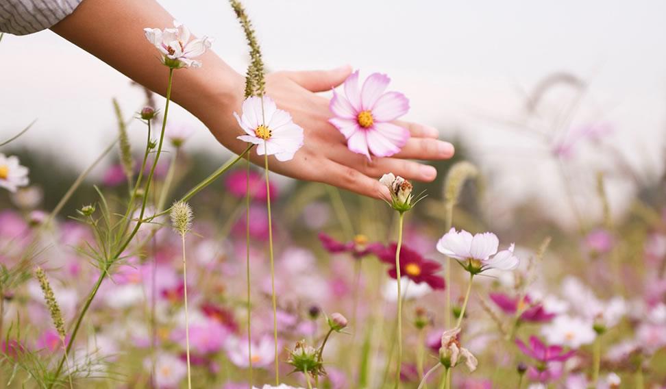 Floresça No Lugar Onde Deus Te Colocou Revista Paz